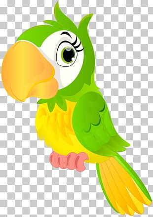 Parrot Bird Animation Cartoon PNG