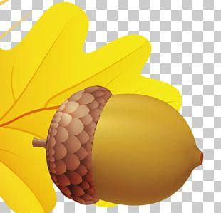 Acorn PNG