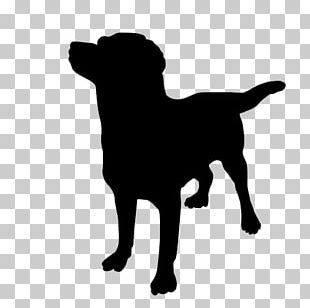How Dogs Learn Pet Sitting Puppy Cat PNG