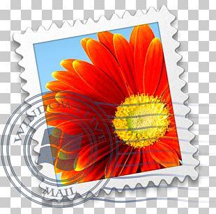 Flower Petal Daisy Family Orange Gerbera PNG
