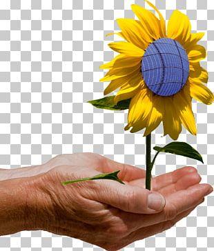 Solar Panels Lunel Capteur Solaire Photovoltaïque Photovoltaics Solar Energy PNG
