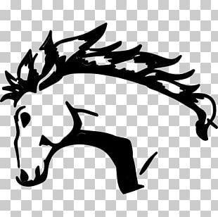 Standing Horse Drawing Animal PNG