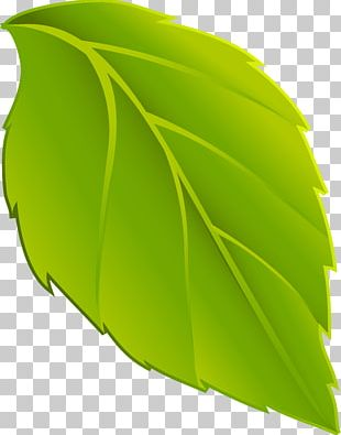 Leaf Animation Plant PNG