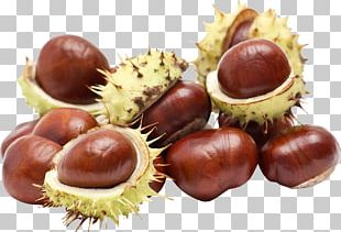 European Horse-chestnut Food Stock Photography PNG