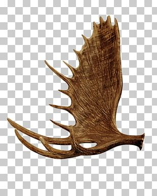 Red Deer Elk White-tailed Deer Antler PNG