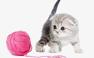 Kitten And Wool PNG