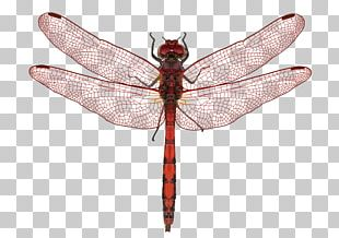 Butterfly Dragonfly Insect Wing Insect Wing PNG
