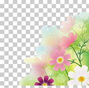 Cosmos Bipinnatus Photography Illustration PNG