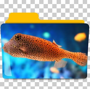 Saltwater Fish Deep Sea Fish Ocean Aquarium PNG