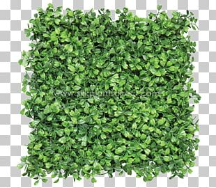 Box Mat Hedge Green Wall Fence PNG