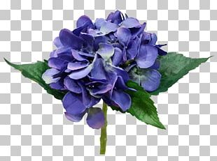 Hydrangea Cut Flowers Flower Bouquet Rose Family PNG