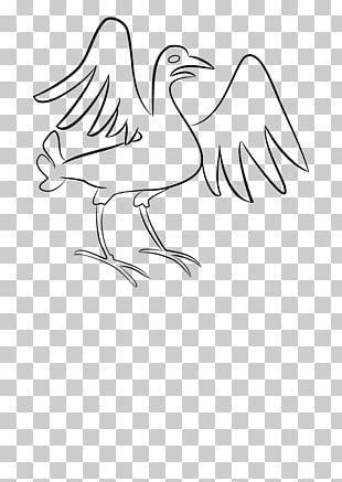 Chicken Bird Feather Duck PNG