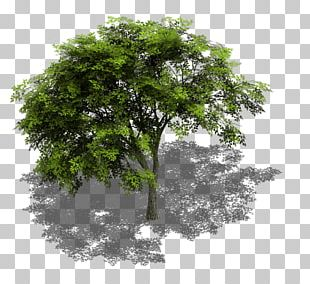 Tree Sprite Isometric Graphics In Video Games And Pixel Art Isometric Projection GameMaker: Studio PNG