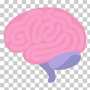 Blue Brain Project Organ Human Brain PNG