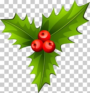 Holly Christmas Tree Plant PNG