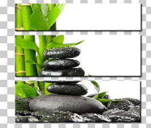 Painting Kiev Tropical Woody Bamboos T-shirt Printing PRINT4YOU Water PNG