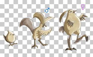 Bird Of Prey Beak Illustration Fauna PNG