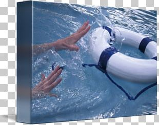 Water Leisure Dolphin Vacation Personal Protective Equipment PNG