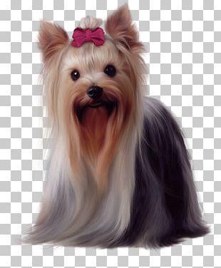 Yorkshire Terrier Golden Retriever Maltese Dog Biewer Terrier German Shepherd PNG