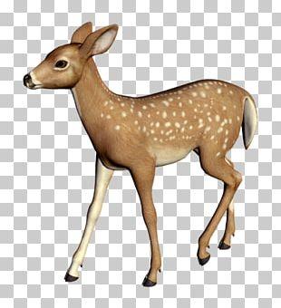 White-tailed Deer Elk Reindeer PNG