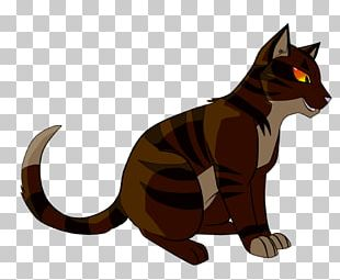 Cat Kitten Whiskers Tigerstar Warriors PNG