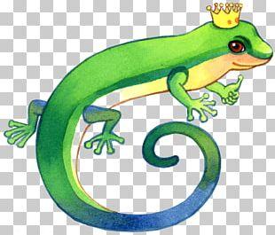 Lizard Cartoon Illustration PNG