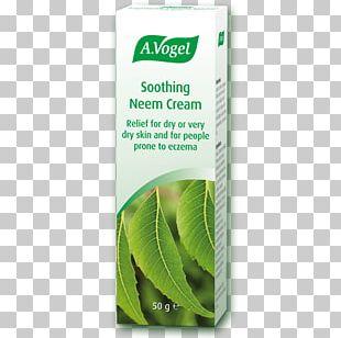 Neem Tree Skin Care Cream Tincture Neem Oil PNG