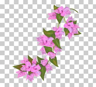 Bougainvillea Flower Petal Drawing PNG