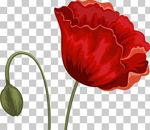 Flower Tulip Red PNG