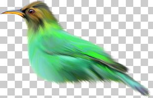 Beak Feather Fauna Coraciiformes Wildlife PNG
