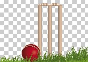Papua New Guinea National Cricket Team Australia National Cricket Team Indian Premier League Fantasy Cricket PNG
