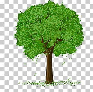 Spring Tree PNG