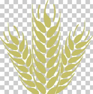 Cereal Grain Wheat PNG