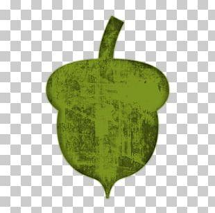 Acorn Computer Icons Oak PNG