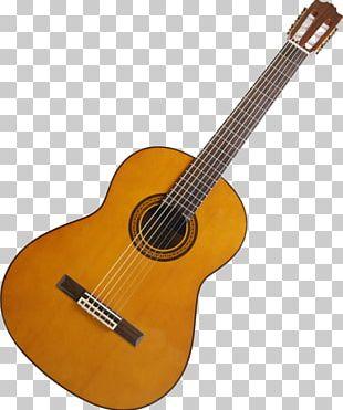 Acoustic Guitar Guitar Amplifier Dreadnought Cutaway PNG