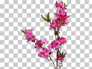 Cut Flowers Floral Design Flowering Plant PNG
