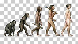Earth Tobias Fxfcnke Homo Sapiens Evolution Male PNG