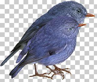 Bird Finch American Sparrows Beak Cygnini PNG