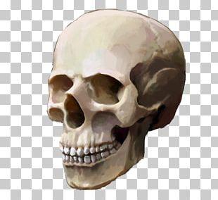 Skull Human Skeleton Backpack School PNG