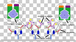 ELISA Western Blot Antibody Diagnosis Of HIV/AIDS PNG