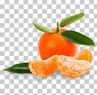 Mandarin Orange Tangerine Clementine Satsuma Mandarin Grapefruit PNG