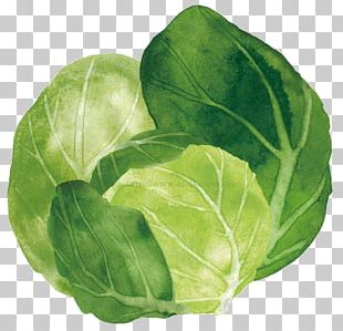 Spring Greens Cabbage Watercolor Painting Vegetable Collard Greens PNG