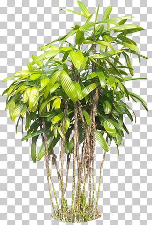 Plant Tree Subtropics PNG
