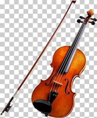 String Instruments Violin Musical Instruments Cello Viola PNG