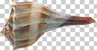 Encapsulated PostScript Conch PNG