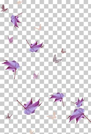 Maple Leaf Purple PNG