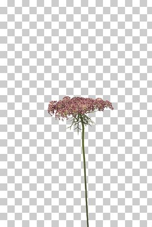Flowering Plant Purple Plant Stem PNG