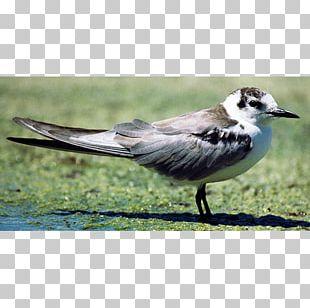 Fauna Ecosystem Beak Feather PNG