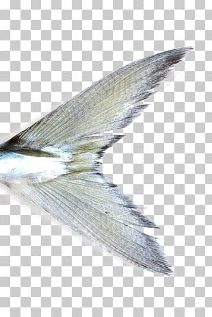 Fish Watercolor Painting Mackerel Gilt-head Bream PNG