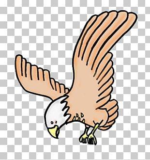 Hawk Eagle Illustration Aquila PNG